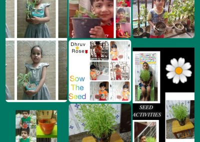 Collage-2 Sow the Seed
