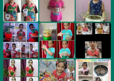 Collage-3 Sow the Seed
