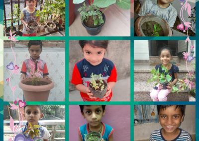 Collage-6 Sow the Seed